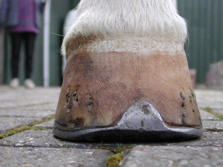 kogel gewricht paard